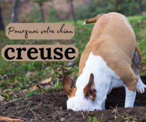 pourquoi votre chien creuse