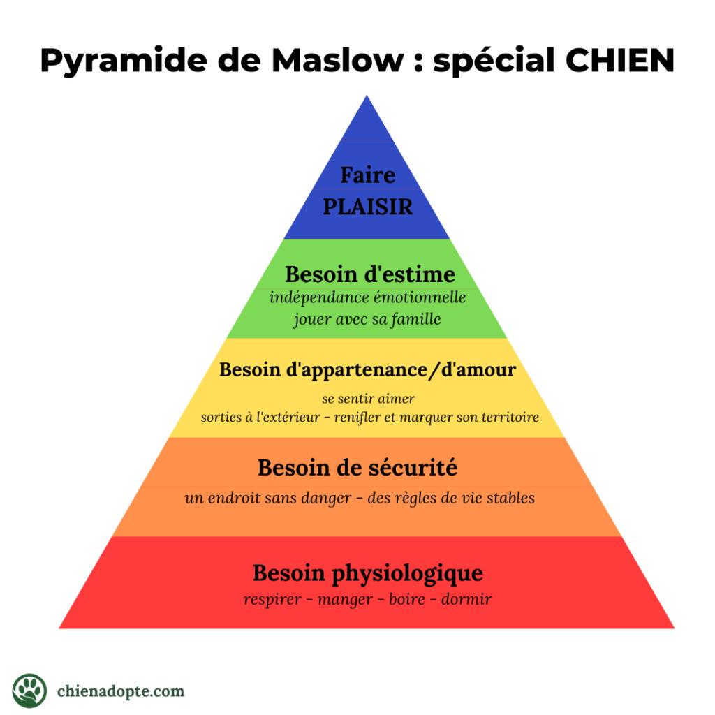 pyramide de maslow chien